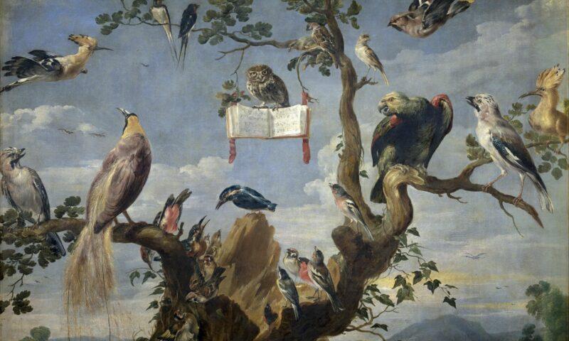 Ptaki siedzące na drzewie