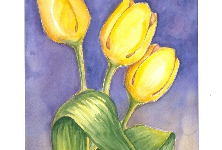 Trzy żółte tulipany na fioletowym tle